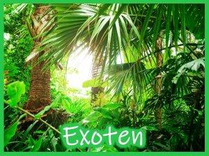 Exoten