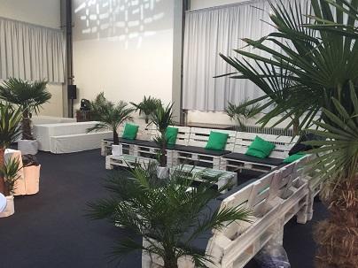 Zimmerpflanzen als Dekoration