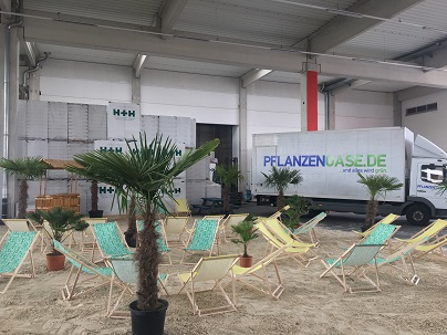 Palmen und Liegestühle zur Miete